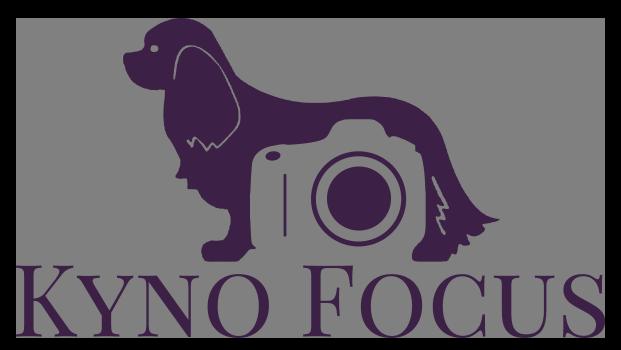 Kyno Focus Hondenfotografie